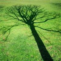 treeShadow200x200